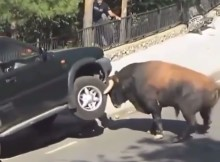 bull-vs-car-what-would-you-do-if-that-was-your-car-comment-below-double-tap.jpg