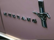 pink-and-a-mustang-golden-opportunity.jpg